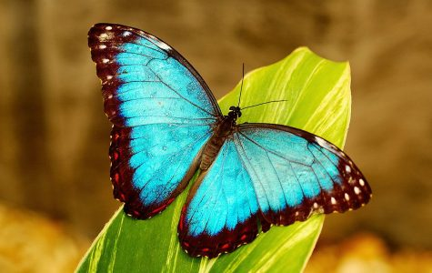 """""""Bee"""" mindful of the importance of our butterflies and other insects"""
